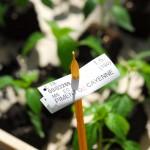 tracabilite-plant